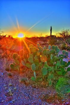 Sunrise over the desert, Arizona USA ck Beautiful World, Beautiful Places, Beautiful Pictures, Image Nature, Arizona Usa, Le Havre, Beautiful Sunrise, Belleza Natural, Route 66
