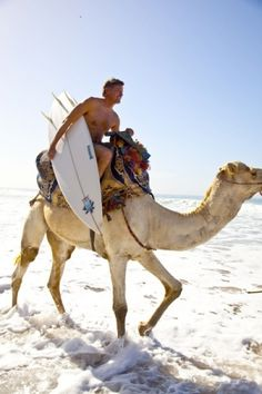 Yes, saw many camels at the beach. Surf Camp in Morocco.. maybe i pinned it for the hot guy with a surf board..