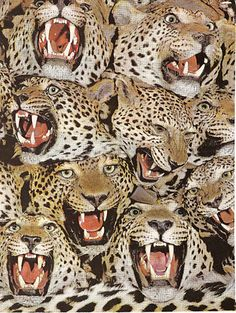 I will have a 10 headed spotted wild cat.  I think this is a leopard.  Yea.  I will have a 10 headed leopard named Michelle pronounced ME-shell.