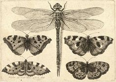 Etching of butterflies and dragonfly - 1647