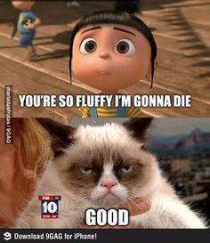 Your so fluffy I'm gonna die. Good. #grumpycat #meme #fluffy #die