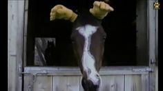 Ha! Funny Horses, Painting, Art, Art Background, Painting Art, Kunst, Paintings, Performing Arts, Painted Canvas