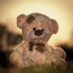 #teddy #teddy bear #bear #toy #stuffed #cute #vanstry #springfield #springfield, MO #photography