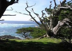 Point Lobos State Reserve #RideColorfully