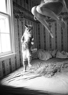 (cat,bed,jumping,black and white,photography)