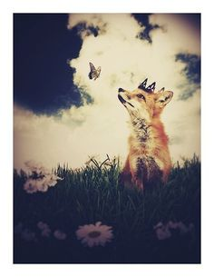 The Little Fox Prince, 8.5x11 inch Print, Fox Art, Fox Print, Woodland Fairytale Art Print