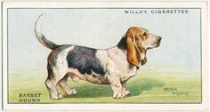 Dog Artwork, Basset Hound Dog, Vintage Dog, New York Public Library, Old Postcards, Moose Art, The Originals, Digital, Cats