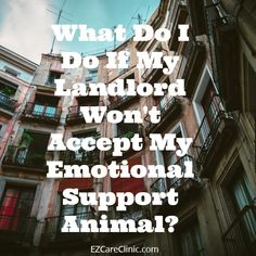 What Do I Do If My Landlord Won't Accept My Emotional Support Animal? While searching for rented accommodation, it isn't uncommon to see that housing providers or landlords have imposed a policy of 'no pets' as a portion of their agreement. Usually, it's due to multiple factors like noise, possible property damage, or merely due to insurance limitations.   #EmotionalSupportAnimal #esa #ESAandLandlords #ESAcertification #esahousing #esalandlord #landlordpetrequireme