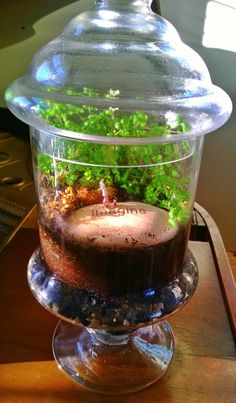 A small terrarium, very inspirational!