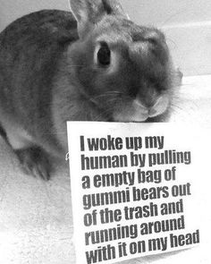 Gummeh bearz... #petshaming #bunnyshaming #bunny #bunnies #rabbit #rabbits #pet #pets #cuteanimals #cuteanimal #bunniesofinstagram