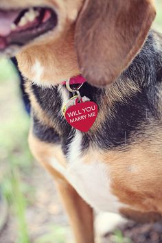 ♥ Proposing with a puppy - BEST. IDEA. EVER. #dog #puppy #proposal