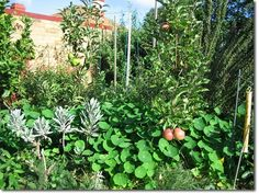 Lessons from an Urban Back Yard Food Forest Experiment Permaculture Forums, Permaculture Courses, Permaculture Information & News
