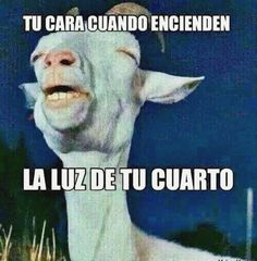 Your face when someone turns on the light of your room! Funny Quotes, Funny Memes, Hilarious, Fun Funny, Funny Birds, Funny Animals, Sleepy Quotes, Mexican Jokes, Mexican Problems