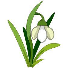 Imagini pentru ghiocei Natural World, Plant Leaves, Clip Art, Nature, Plants, Image, Google Search, Photos, Flowers