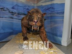 Saber-Toothed Tiger( Dinosaurs, Dinosaur Costumes, Dinosaur Rides, Fiberglass Dinosaurs, Dinosaur Skeletons And Fossils Supplier Dinosaur Skeleton, Dinosaur Costume, Ice Age, Fossils, Lion Sculpture, Statue, Costumes, Animals, Art