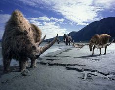 Woolly rhino, an Irish Elk and a wooly mammoth in the background.