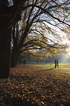 Fawkner Park #Melbourne (madebyDC)