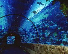 The aquarium was pretty cool!