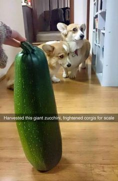 Funny Pictures Of The Day  48 Pics
