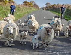 Only in the Isle of Man © Peter Killey - www.manxscenes.com