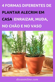Plantas Bonsai, Chinese Herbs, Vegetable Garden, Beautiful Gardens, House Plants, Diy And Crafts, Planter Pots, Home And Garden, Vegetables