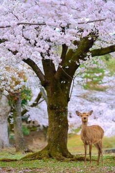 deer amidst flowering trees