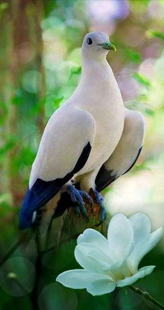 Wild Bird - chadi Hayek - Google+