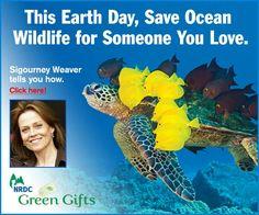 Earth Day Celebration...