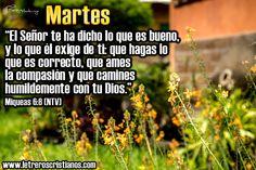 Martes-Miqueas-6-8-NTV