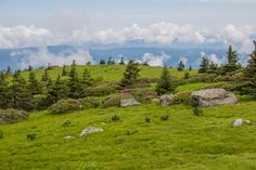 Located along the North Carolina/Tennessee state line, and where Pisgah and Cherokee National Forests merge, Grassy Ridge in the Roan Highlands is the longest stretch of grassy balds in the Appalachian Mountains. The Appalachian Trail navigates this stunning ridge, hopping from Carvers Gap to Round Bald to Jane Bald, and on to the 6,169 foot Grassy Ridge Bald. In short, the Roan Highlands area is a must see.