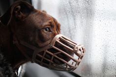 End breed specific legislation! Call on the UK Government to launch an inquiry into the effectiveness of BSL. www.rspca.org.uk/getinvolved/campaign/dogownership/bsl