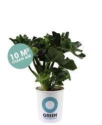 Afbeeldingsresultaat voor luchtzuiverende planten Ogreen