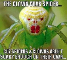 Separated at mirth: Meet the crab spider that looks just like the clown in hit…