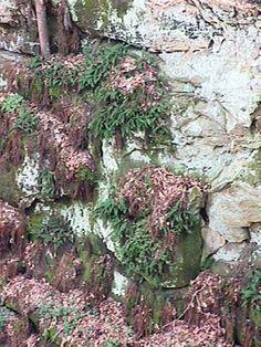 Fern Cliff Nature Preserve, Nature Conservancy. © Eric Thiel