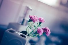 ronaldo ichi / portrait photography on @ronaldoichiphotography  #photography #photographer #still #object #fotografia #fotografo #instagramers #カメラマン #フォトグラフィー #写真 #スティル