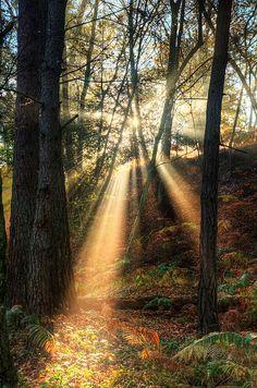 Rayons de soleil par brumeux misty d'automne paysage de forêt à l'aube