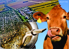 Week 1 Assignment - Facts about Justiniano Posse. One of the statements bellow is true.  1- We drink mate for breakfast as our Uruguayan neighbors  2- In every home there is a cow (and they love mate too) 3-  We have the longest avenue with trees in the region.-