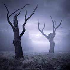 Sparse and Spooky Trees Spooky Trees, Spooky 2, Deciduous Trees, Dark Forest, Pics Art, Conte, Photo Manipulation, Great Photos, Dark Side