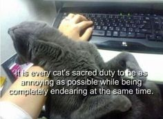 15 Funny Cat Pics and Memes Just in Time for Caturday!