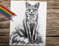 coloring book for adults – Etsy DK