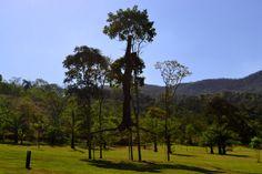 Discovering Inhotim #Inhotim #Brazil #MinasGerais #openairmuseum