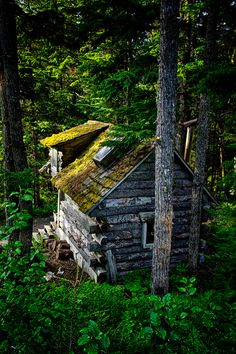 old mossy cabin next to Hidden Creek B, Girdwood, Alaska  I want one just like it. A little cozy hideaway. Perfection.