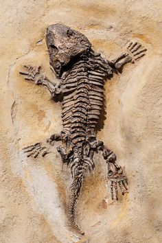 Dinosaur, Lizard, Fossil, Old, Ancient, Stone, Nature - by PublicDomainPictures on PIXABAY ( creative commons - public domain - copyright free image )
