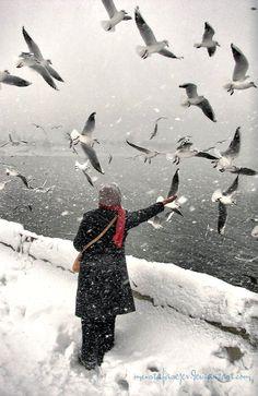 Snow and Birds..   by MustafaSEZER