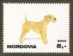 Dog Photo Full Body Study Portrait Postage Stamp LAKELAND TERRIER Mordovia MNH