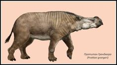 Resultado de imagen para Dolichorhinus