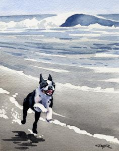 Boston Terrier at The Beach Art Print by Watercolor Artist DJ Rogers Fox Terriers, Boston Terriers, Terrier Breeds, Boston Terrier Love, Terrier Puppies, Mastiff Puppies, Russell Terrier, Chihuahua Dogs, Bulldog Puppies