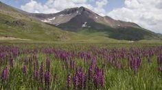 Engineer Pass along Colorado's Alpine Loop Scenic Byway