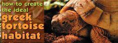 Reptile Habitats: How to Create a Greek Tortoise Habitat
