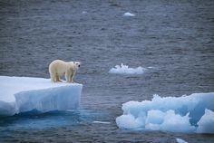 Polar bear on small iceberg   Flickr - Photo Sharing!